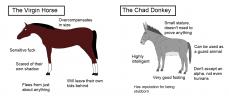 chad donkey.png